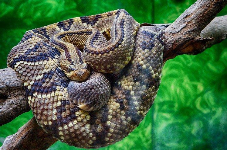 Animales reptiles