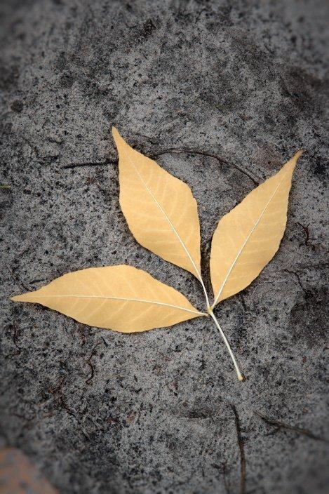 Hoja en otoño