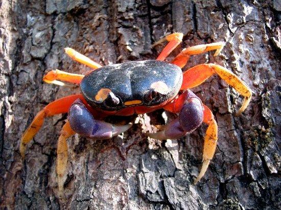Animales crustáceos