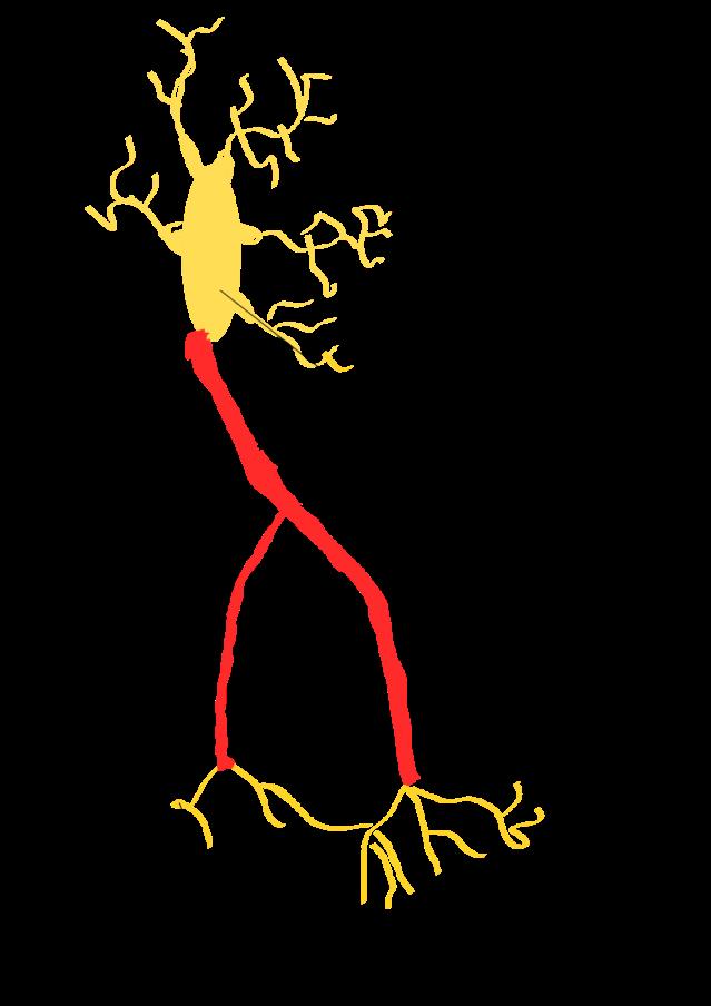 Estructura básica de una neurona