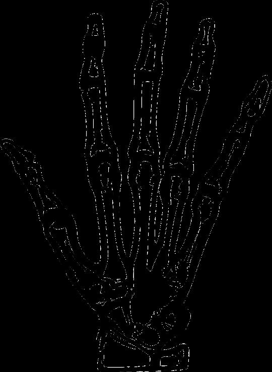 Huesos de palma de la mano