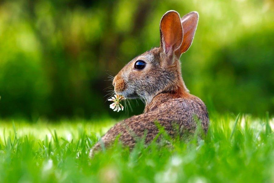 Conejo en una pradera