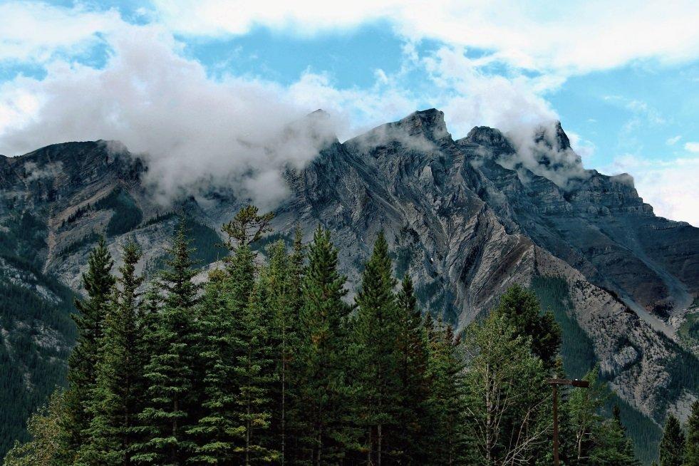 Árboles en las montañas