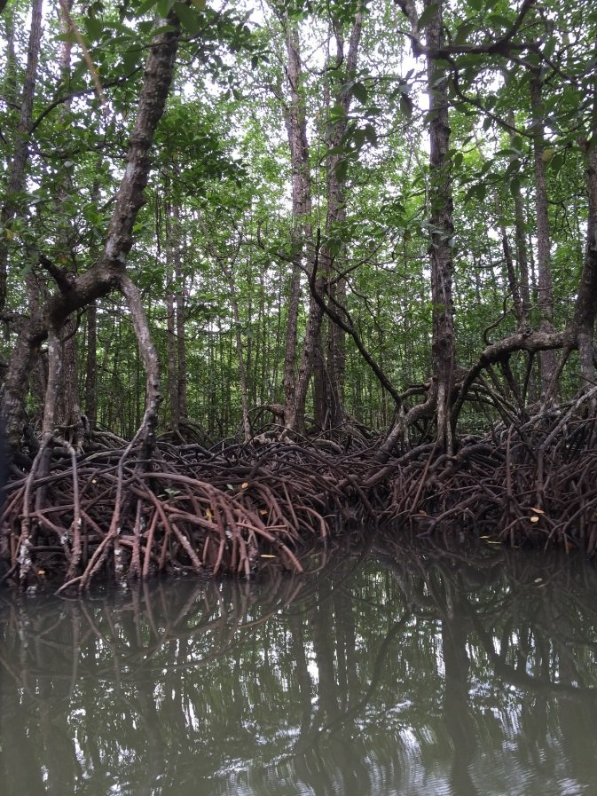 Árboles en manglares