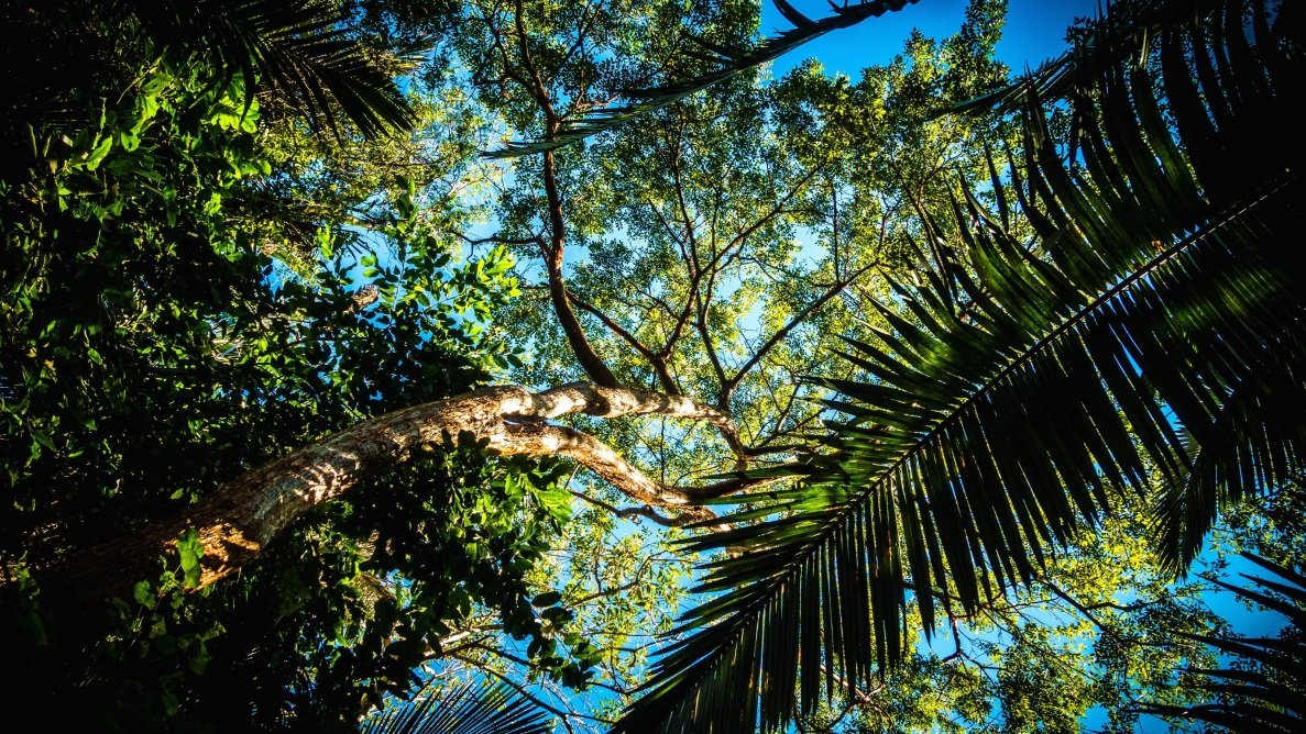 Árboles en selvas tropicales